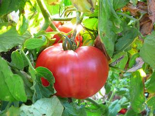 Conserva di Pomodori – Homemade Tomato Paste